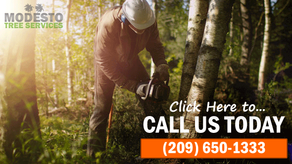 modesto tree service company photo